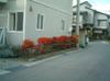 2008_11_15